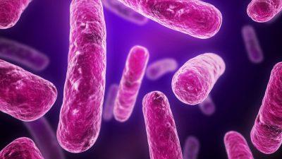 Bacteria patógeno