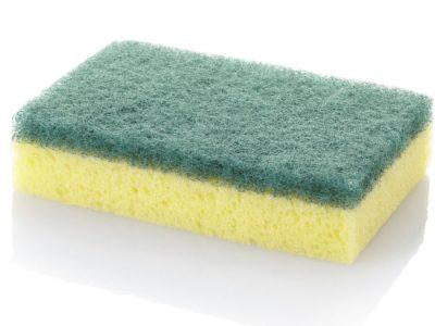 esponja bacterias
