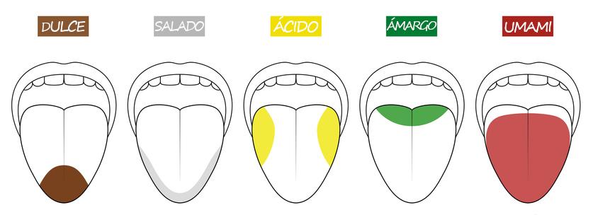 Sabores lengua